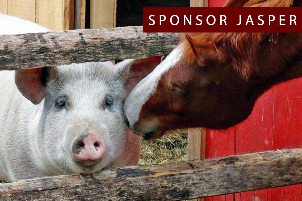 sponsor-jasper-1