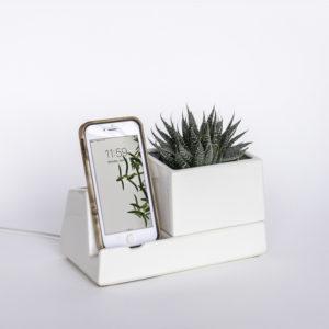 sproutwhiteplant