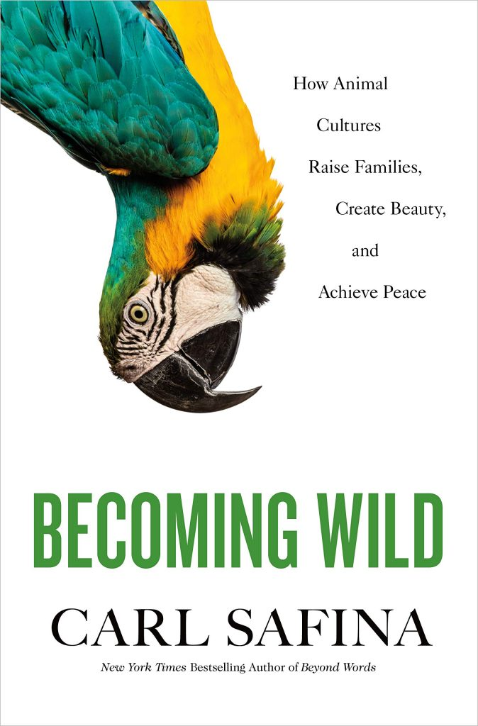 becoming wild cover